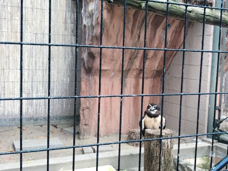 天王寺動物園 フクロウ